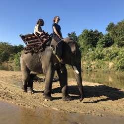 Taungoo, découverte d'un camp d'éléphant  (jour 2)
